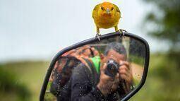 Observador une fotos de natureza com frases reflexivas, veja algumas!