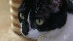 Miau! Conheça mais sobre o comportamento felino