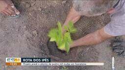 Trabalhadores rurais de Sooretama são desafiados a reflorestar rota com ipês