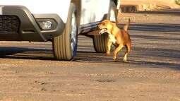 Morador se muda de casa e abandona cães, em Itumbiara