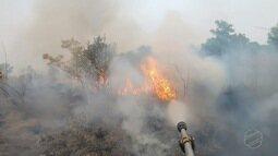 Fogo destrói quatro milhões de hectares de vegetação no Pantanal