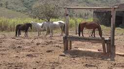 Pecuaristas baianos estão em alerta depois que doze animais foram diagnosticados com raiva