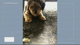 Homem encontra cachorro e procura dono, em Goiânia