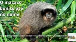 Sons da Terra 19/08: conheça o sauá, o macaco bonito até no nome