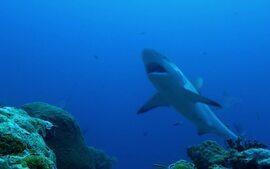 Fantástico: mais um episódio da série 'Tubarão - Reis dos Mares'; dia 1º
