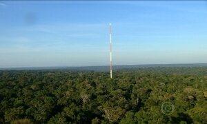 Maior torre de estudos climáticos do mundo é construída no Amazonas
