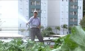 Agricultura urbana ganha importância na alimentação mundial
