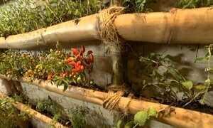 Jardim pode decorar pequenos espaços sem gastar muito dinheiro