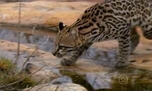 Boqueirão da Onça é refúgio para animais no Nordeste