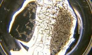 Dengue preocupa e Caraguatatuba decreta calamidade pública