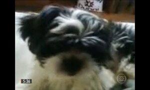 Cães de raça são alvos de ladrões em Brasília