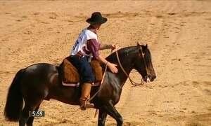Competição na Expo Inter premia melhores cavalos da raça crioula