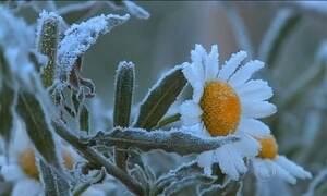 Temperaturas abaixo de zero mudam a paisagem no Sul do país