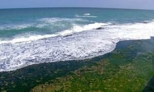 Documentos mostram que tsunami atingiu costa brasileira século XVIII