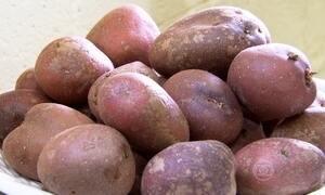 Andes são o berço da batata cultivada pelo homem pré-histórico