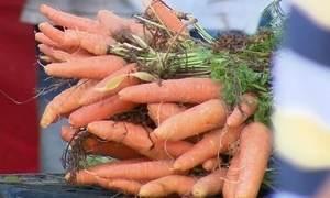Feirantes vendem produtos com agrotóxico como orgânicos