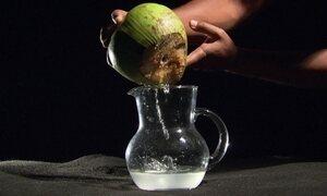 Fibra do coco pode virar remédio
