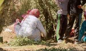 Somente mulheres colhem azeitonas no oásis das mil palmeiras, no Saara
