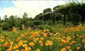 Apicultores cultivam abelhas no jardim botânico real de Londres