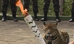 Brasil se comove com morte de onça exibida ao lado da tocha olímpica