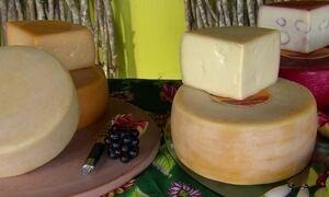 Agreste de PE produz queijos similares aos melhores do mundo