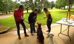 Hoje é dia de passear com o cachorro: criando brinquedos para o seu pet