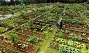 Clube da horta: sócios dispensam piscinas e passam dia plantando