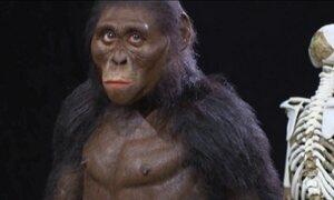 Revista Nature diz que é provável que o fóssil Lucy morreu ao cair da árvore