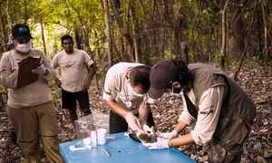 Pesquisadores e ribeirinhos se unem para preservar floresta