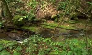 Vegetação amazônica resiste na região mais árida do Brasil
