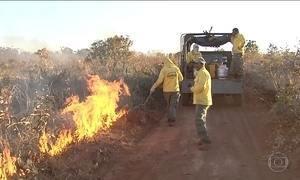 Fogo vira principal arma de combate às queimadas em reserva no cerrado