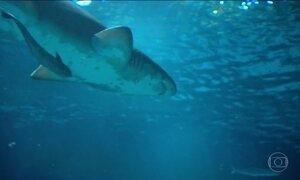 Tubarões são os novos moradores do aquário do Rio