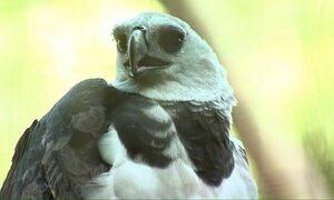 Pesquisadores protegem aves ameaçadas de extinção