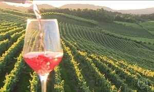 Vale dos Vinhedos (RS) é destino certo para os amantes de vinho