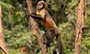 Com medo da febre amarela, moradores de Minas matam macacos