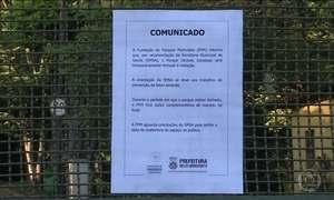 Secretaria de Saúde de Belo Horizonte investiga morte de macaco