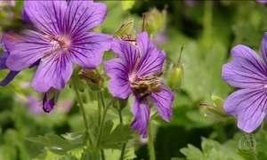 Pesquisadores britânicos descobrem que as abelhas podem aprender