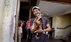 PI  tem maior número de casas com gatos; no PR, preferência é por cães