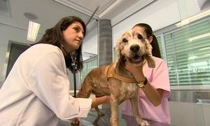 Plano de saúde para cães e gatos tem faturamento de R$ 200 mil em 2016