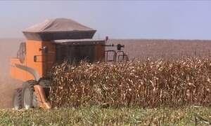 Produtores do Paraná se preparam para colher nova safra de milho