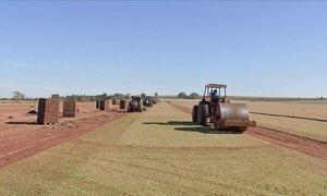Polo de produção de grama está em crise no sudoeste de São Paulo