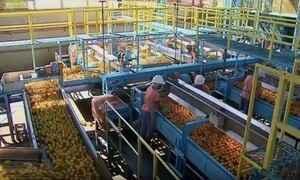 Exportações de laranja têm pior desempenho desde 1991