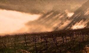 Agricultores torcem pelo frio para garantir boa safra de uva no Sul
