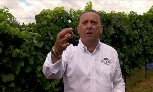 Paixão pelo vinho leva Galvão Bueno a produzir uvas no Rio Grande do Sul
