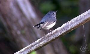 Observação de aves salva espécies e movimenta bilhões pelo mundo