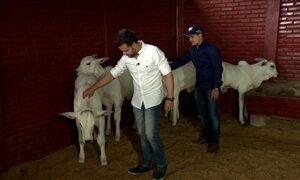 João Neto e Frederico investem na criação de gado de elite em GO