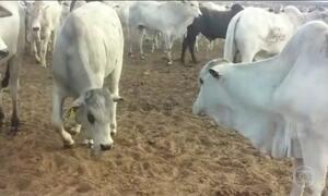 Laudo confirma botulismo em animais mortos em confinamento em MS