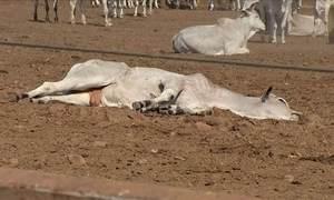 Exames confirmam que botulismo é causa da morte de mil animais
