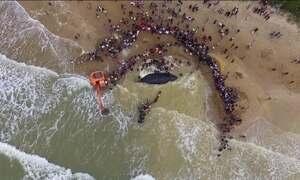 Baleia encalhada em Búzios tem ajuda de bombeiros e volta ao mar