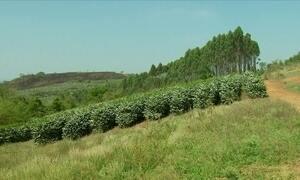 Produtores de café do sul de MG estão otimistas com a safra do café